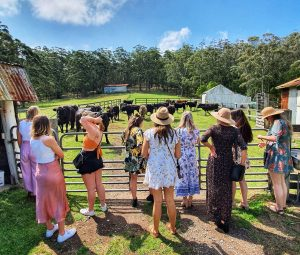 group farm experience woodhill mountain wines